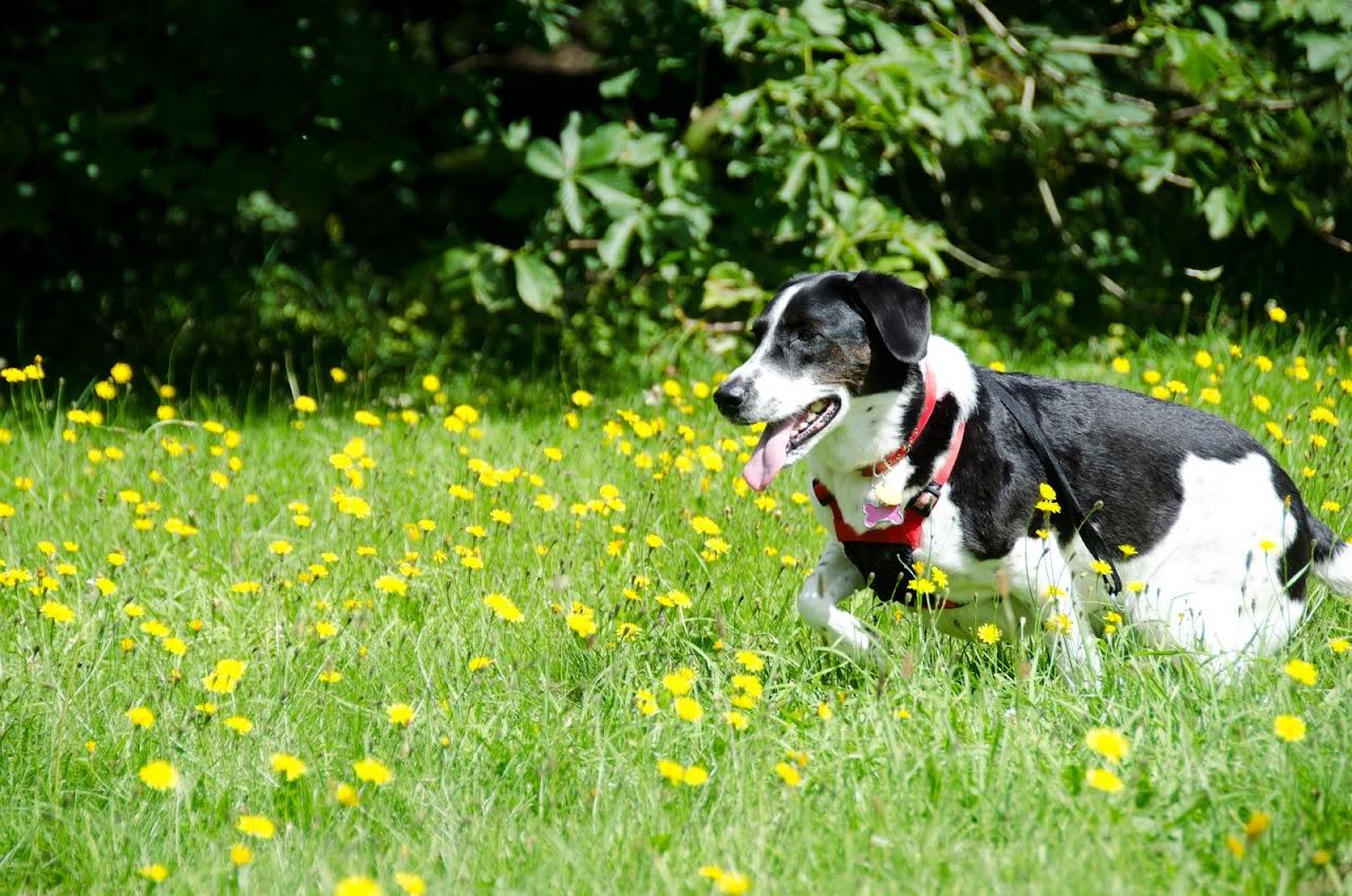 Abby at Westonbirt Arboretum