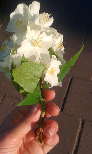 blommor, sösdala, Hässleholm, vårblommor
