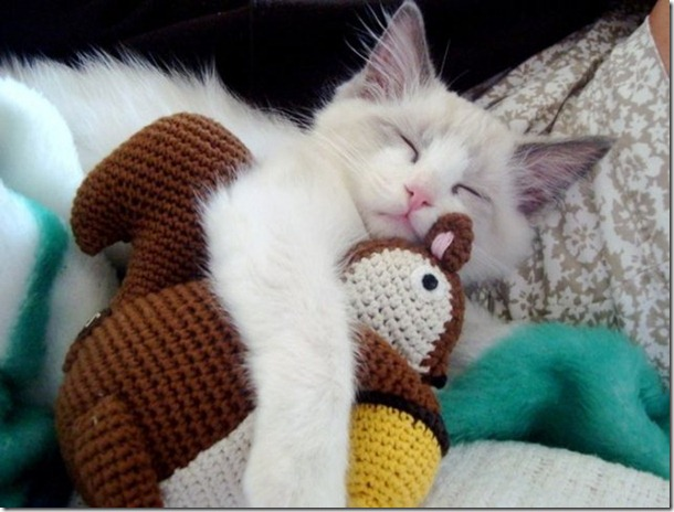cats-stuffed-animals-27