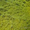 Buck Island Reef - IMGP1286.JPG