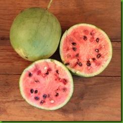 wm155_takii_gem_watermelon