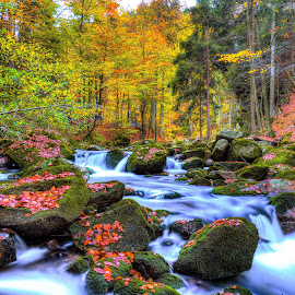 Autumn Day by Lukas Proszowski - Landscapes Forests ( water, color, autumn, fall, long exposure, forest, river, poland, colorful, nature,  )