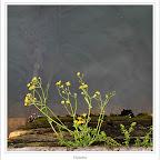 10getaria249.jpg