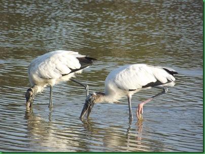 Eco Pond 085