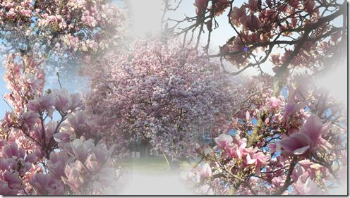 Lyle's Magnolias