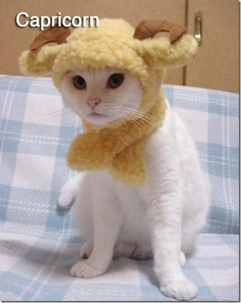 cats-signs-zodiac-6
