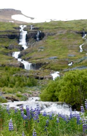 Iceland-3625