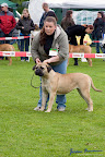 20100513-Bullmastiff-Clubmatch_31105.jpg