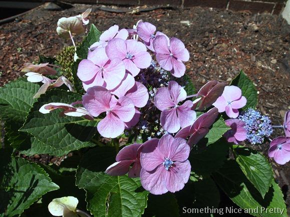 flowers 2014 006