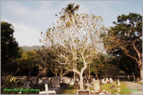 西方路基督教墓园 2