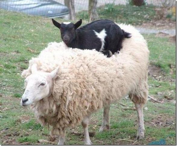 animals-behaving-badly-5