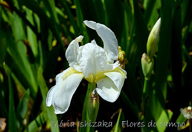 Glória Ishizaka -flor  1