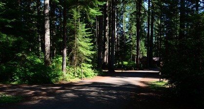 Silver Falls Campground near site 79