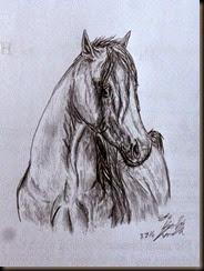 Horse004