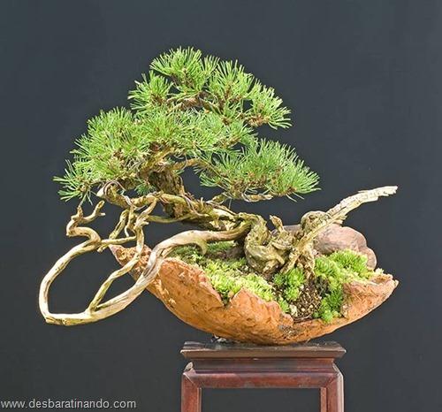 bonsais arvores em miniatura desbaratinando (40)