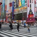 pedestrian cossing in akihabara in Akihabara, Tokyo, Japan