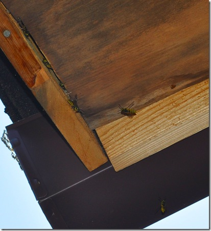bees in soffit 004