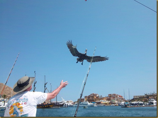 cabo 2011 030