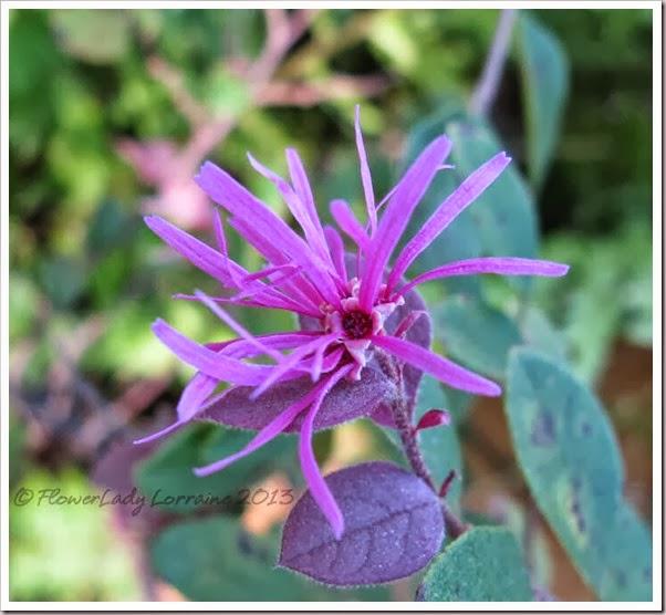 10-20-fringe-flower2