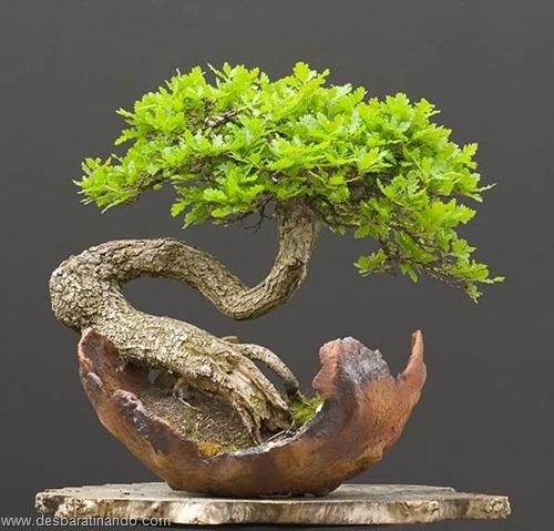 bonsais arvores em miniatura desbaratinando (83)