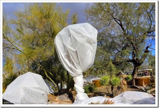 141231_Tucson_Bachs_0041