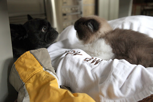 Hi Vivaldi!  I know our basket of Frenchie clothes makes the perfect cozy nook for catnapping, but would you mind if I grab our raincoats?  It's wet outside and Sharkey and I have got to go, if you know what I mean!