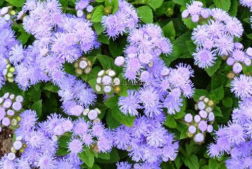 Azul - Glória Ishizaka 28