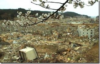 tsunamicherryblossom