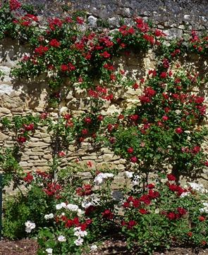 loches-rosesn
