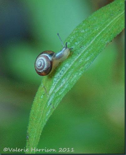 2-tiny-snail