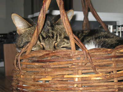 Duchess Snug in Basket