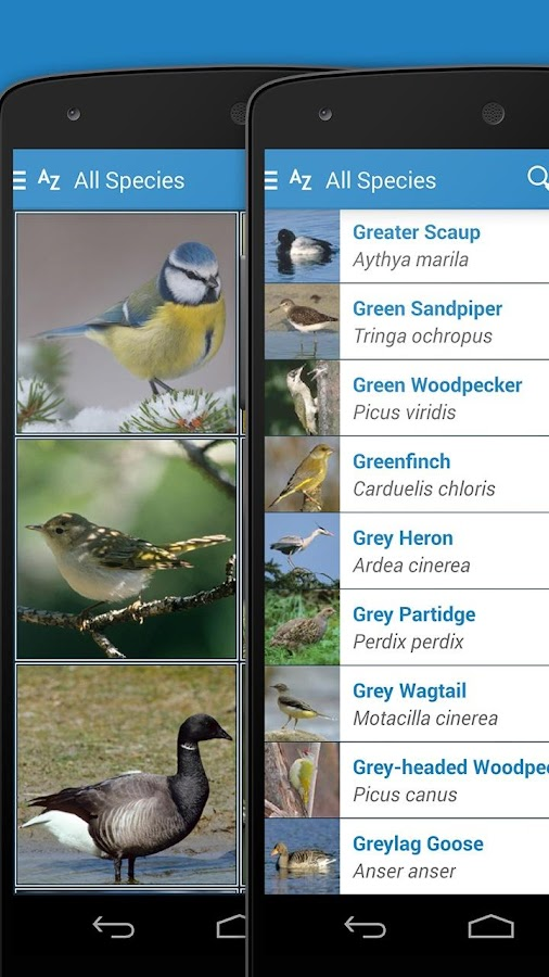 iKnow Birds 2 PRO - Europe Screenshot 3