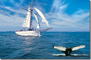 Sailing in the Bay of Fundy, sighting a whale