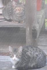 Stray Kitties 10.2011 on porch1
