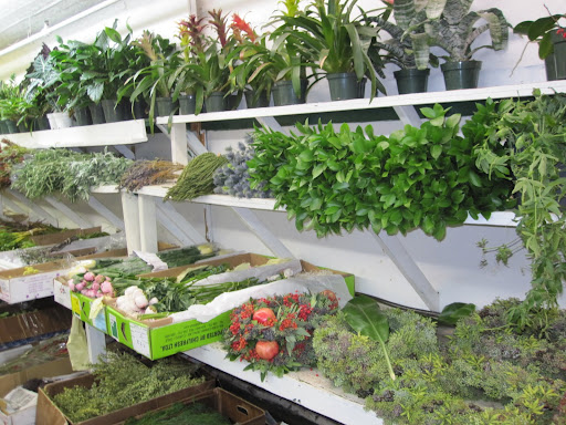 Throughout the store you can find different greenery.