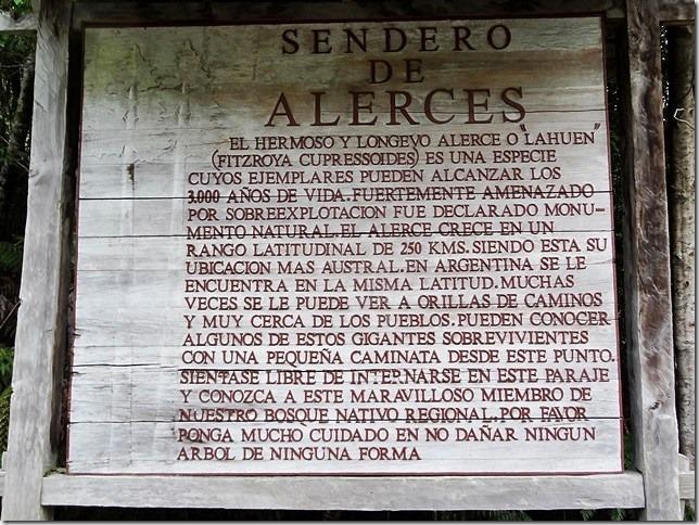 Sendero_de_Alerces_DSC01633