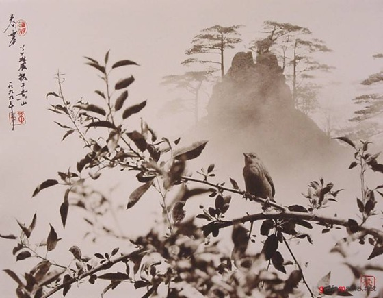 don-hong-oai06