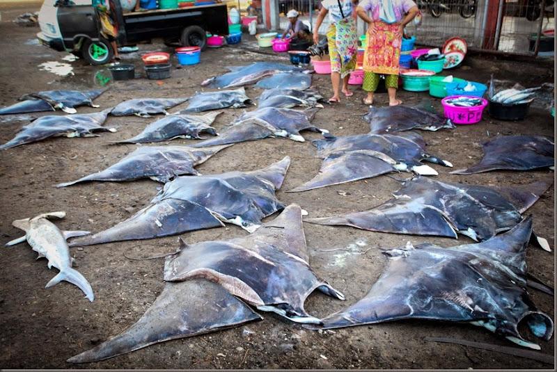 Tanjung Luar fish market - East Lombok - Indonesia