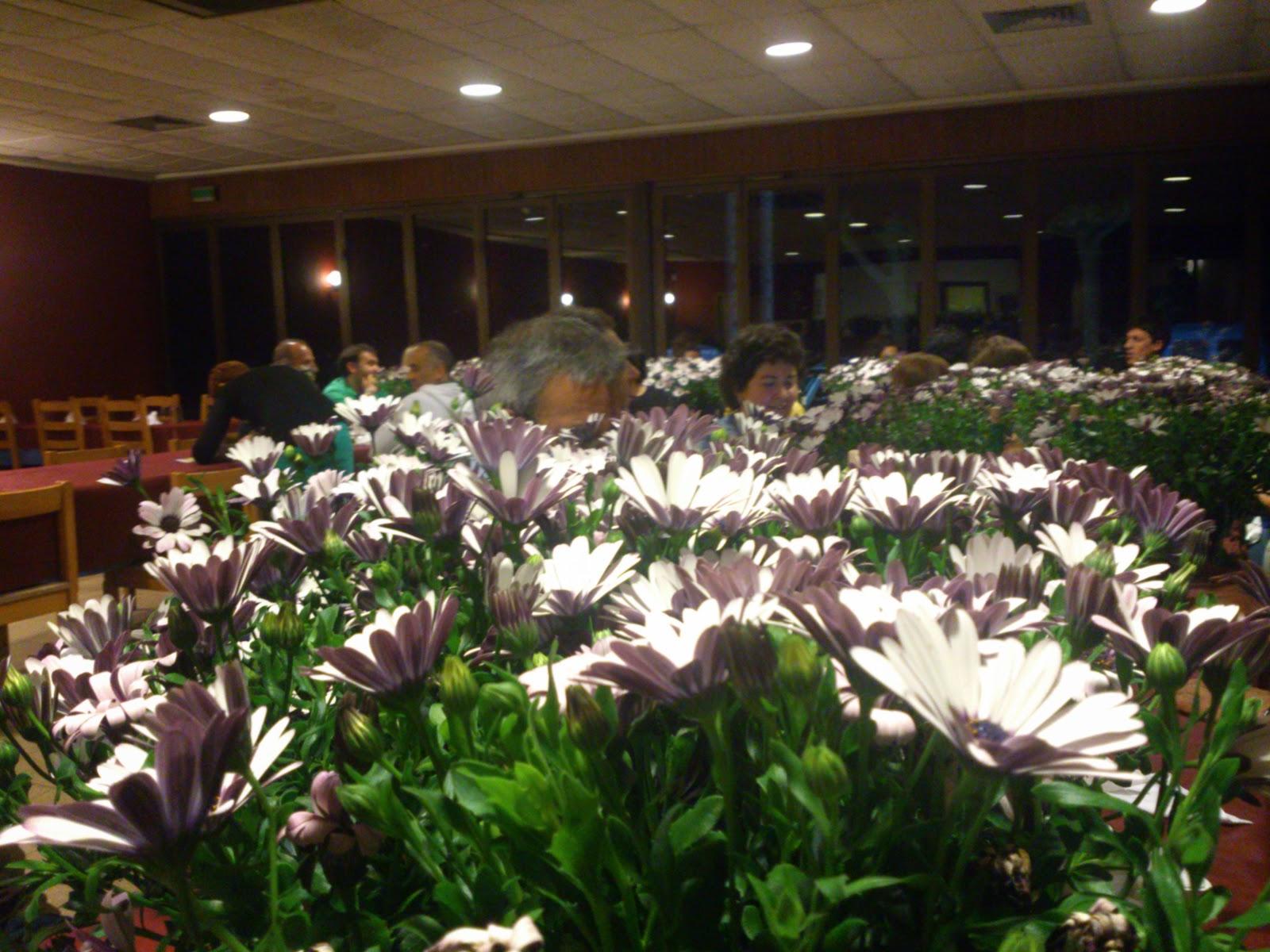 Blog del jard n bot nico de iturraran mayo 2014 for Restaurante jardin botanico