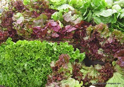 Lettuce in Eugene