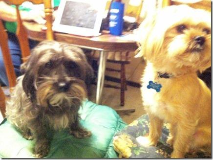Sadie&Buddy1-10-12a