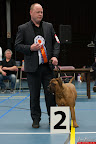 20130510-Bullmastiff-Worldcup-1078.jpg