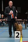 20130510-Bullmastiff-Worldcup-1078.jpg