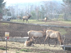 11.2011 Maine Elks