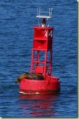 250px-Buoy_seal[1]