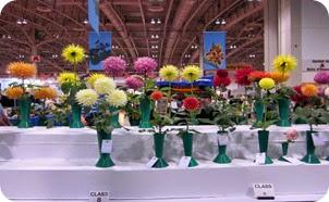 CNE_Flowers
