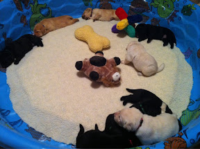 Pups with toys!