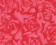 24292573_rose181