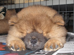 Franny - take a look at this!  Ghenghis Khan is fast asleep.  Is it really best to let sleeping dogs lie?  Hey!  Fluff Ball!!