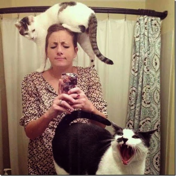 crazy-cats-stupid-006